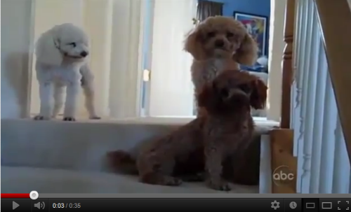 Which Is The Guilty Dog?